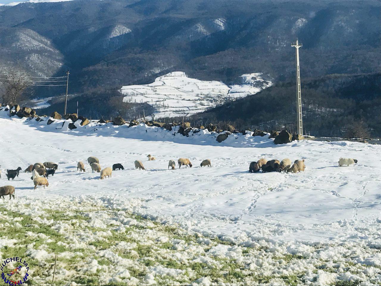 روستای سوچلما